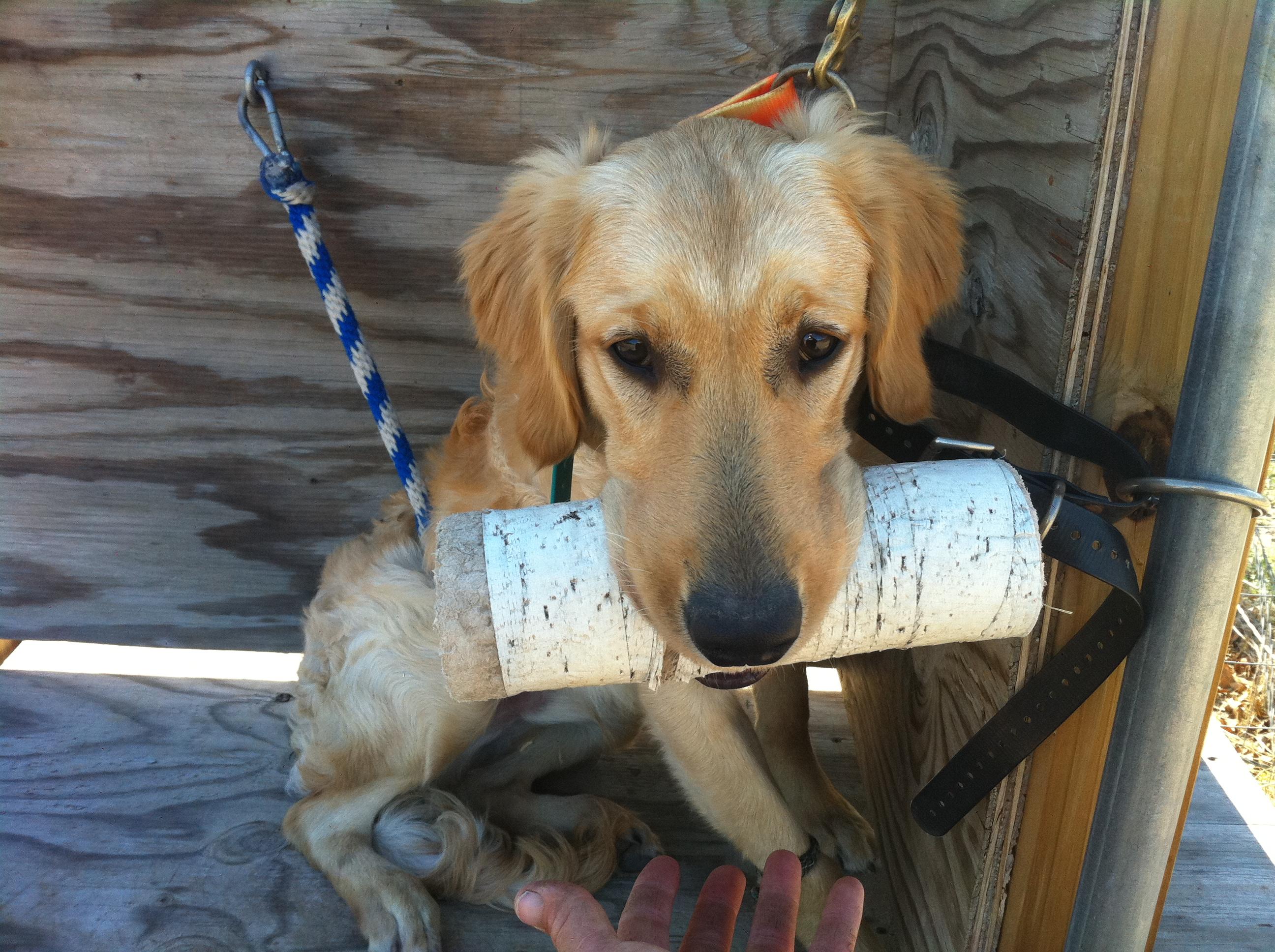 Tip Toe Dog Training