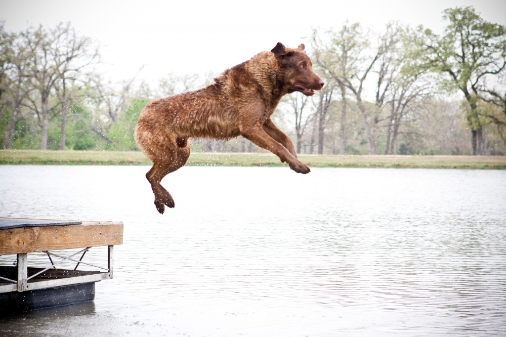 Tucker Kuenker (Super Chessie)  flying into the water to make a retrieve.