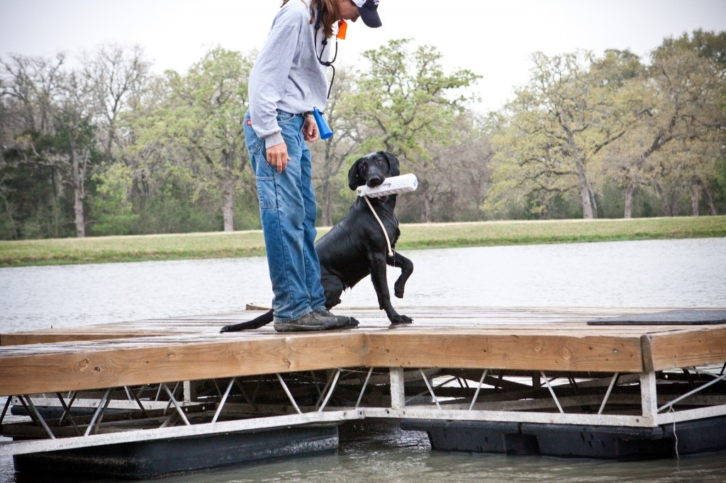 Boone Youngblood offers up the bumper so he can concentrate on the next retrieve.